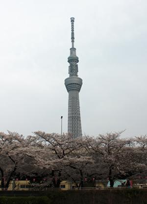 隅田川より東京スカイツリー